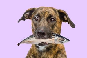 fish oil for dogs image of dog with fish