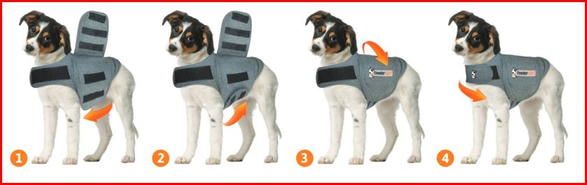 image of infographic about how to put a thunder jacket on your dog