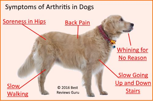 graphic what are the signs of arthritis in dogs